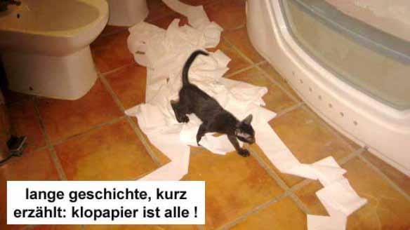1wc-cat