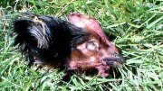 hühnerkopf