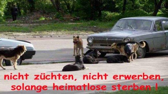 heimatlos1