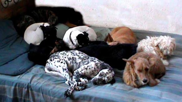 9 hunde im bett