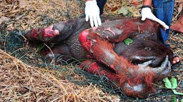 sterben für palmöl?