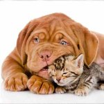hund+katz2