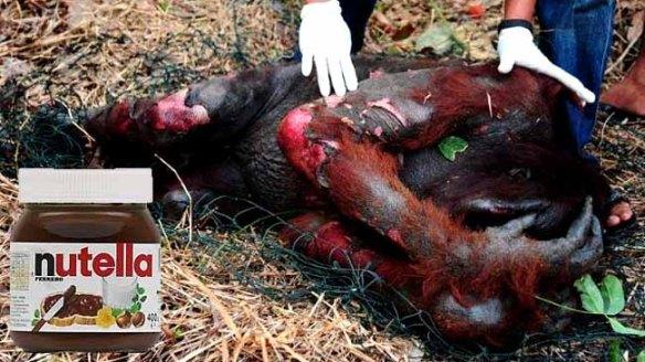 nutella-orangutans