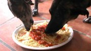 pasta-dogs