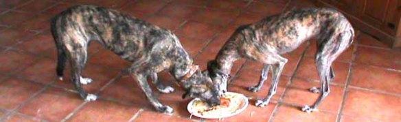 pastafari-dogs