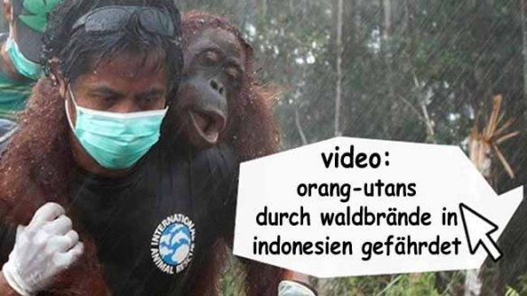 orang-utans in indonesien