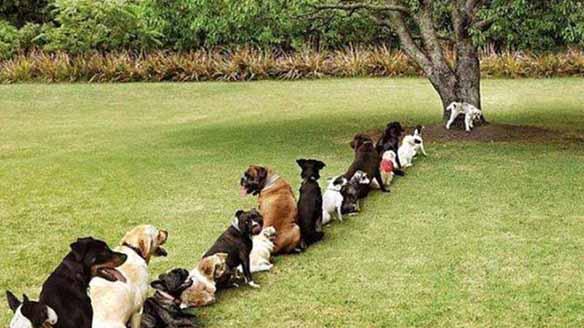 hunde pinkeln an baum