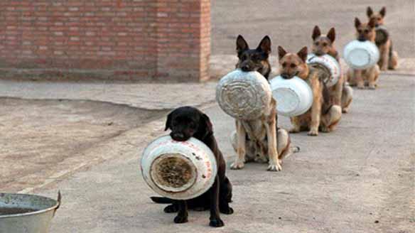 hunde warten auf fressen