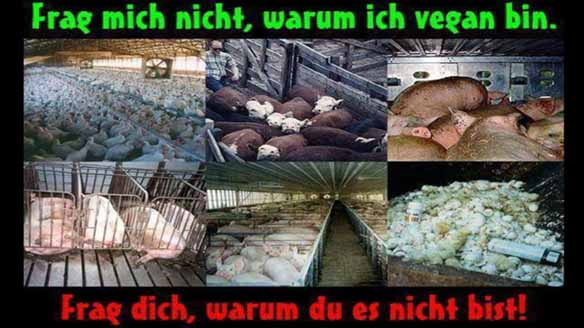 vegan-fundsache 3