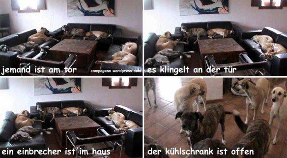 wachhunde