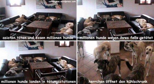 news für hunde