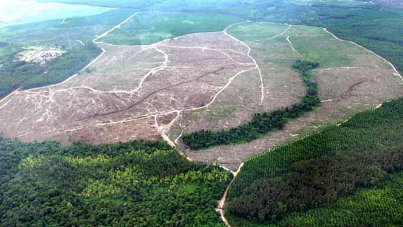 regenwald-palmöl
