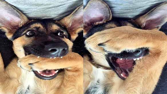 hundeselfie